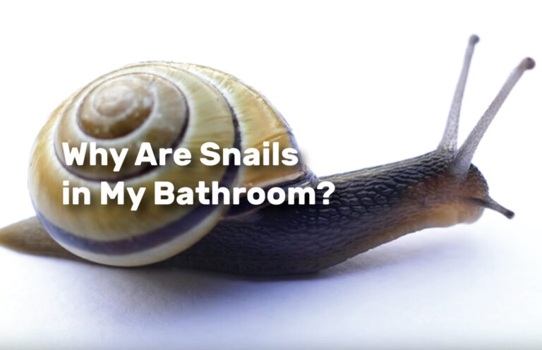 Why Are Snails in My Bathroom realestateke