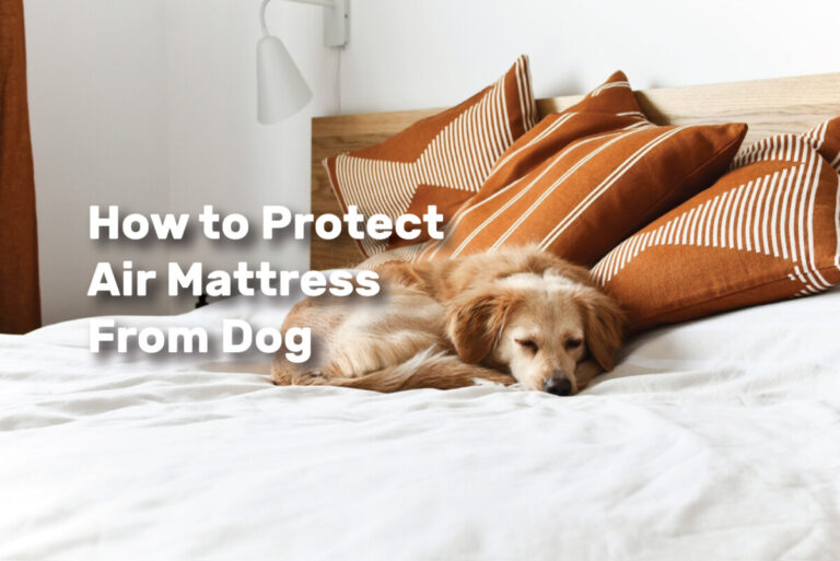 How to Protect Air Mattress From Dog realestateke