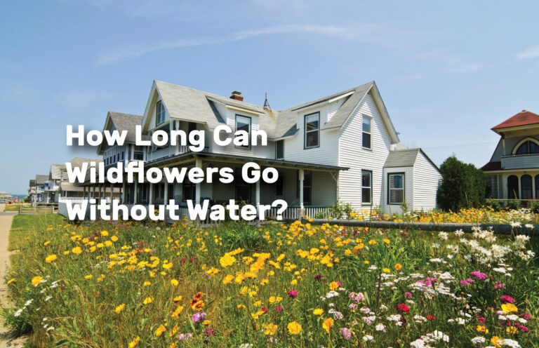 How-Long-Can-Wildflowers-Go-Without-Water realestateke